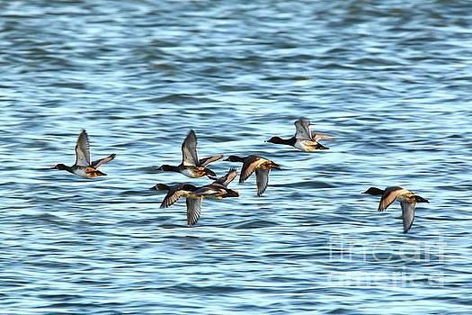 Ducks on the Run by Tony Lee