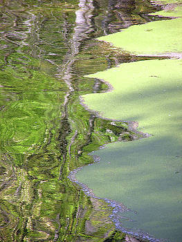Duckweed and Refkection - 1 by Randy Muir