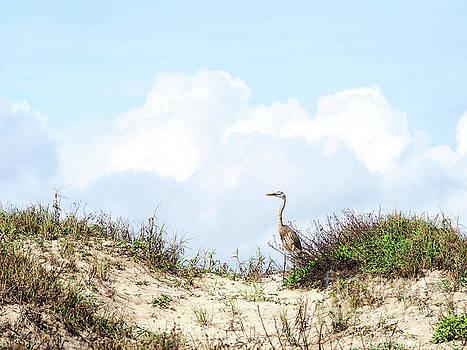 Dune Bird by Gary Richards
