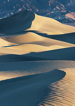 Dune Life... by Kevin Evans