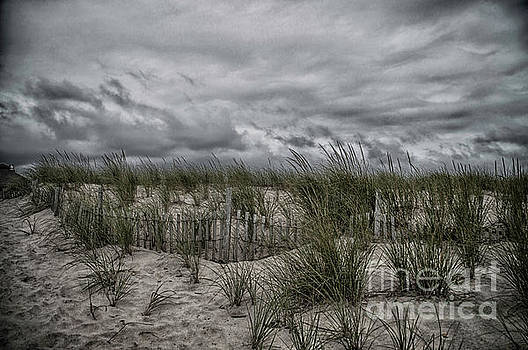 Dunes Day by Judy Hall-Folde