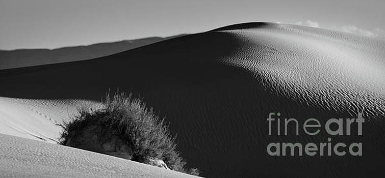 Dunes Of White Sands by Doug Sturgess