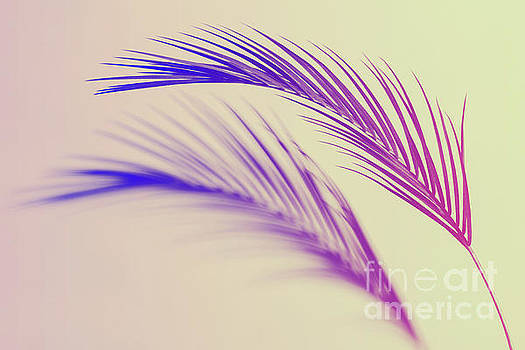 Duotone background of tropical palm leaves by Michal Bednarek