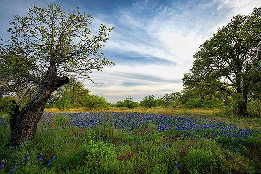 Dust In The Hill Country by Harriet Feagin