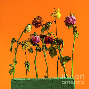 Dying flowers against a orange background by Bernard Jaubert