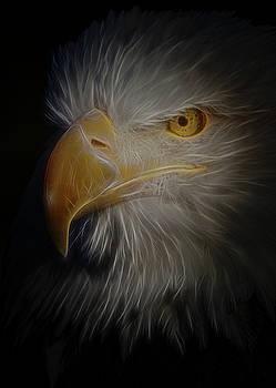 Eagle 6 by Ernie Echols