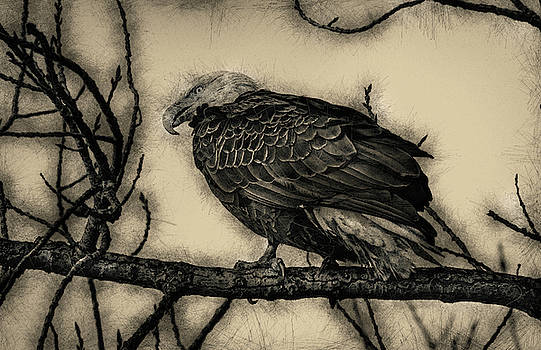 Eagle Art by Ray Congrove