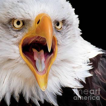 Eagle Calls by Eyeshine Photography