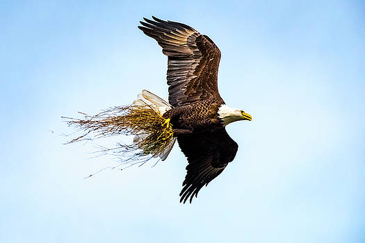 Eagle Home Improvement by David Morefield