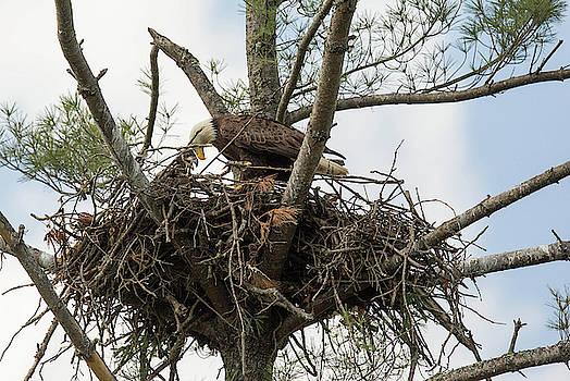 Eagle Nest by Doug McPherson