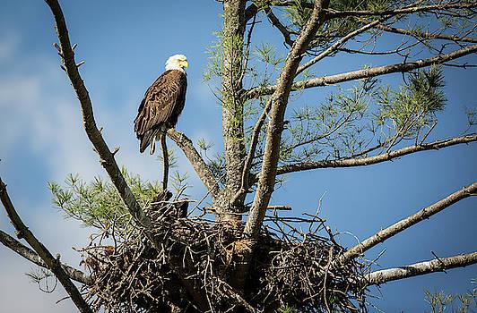Eagle Portrait by Doug McPherson