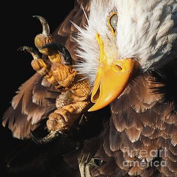 Eagle Scratch by Eyeshine Photography