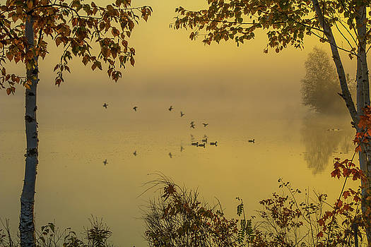 Early Arrivals the Migration in Maine by Jeff Folger