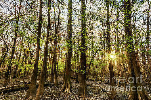 Early Morning Congaree National Park  by Thomas R Fletcher