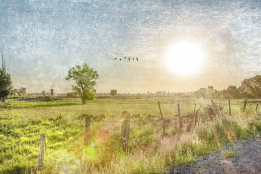 Early Morning by Ramona Murdock