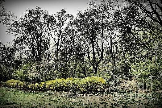 Early Spring in Fort Tryon Park by Sarah Loft