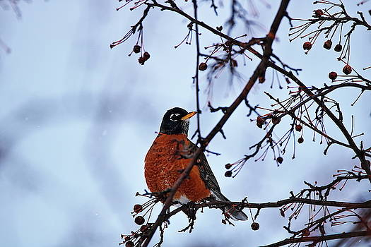 Early Visit by a Robin by Gerald Salamone