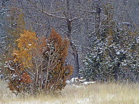 Early Winter on the Western Edge by Cris Fulton