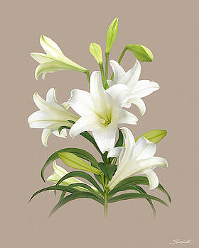 Easter Lily by M Spadecaller