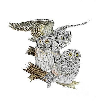 Eastern Screech Owl by Scott Rashid