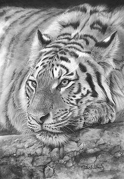 Easy Tiger by Peter Williams