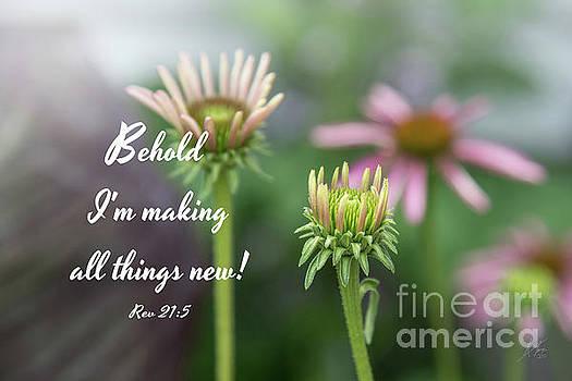Echinacea Garden - Verse by Anita Faye