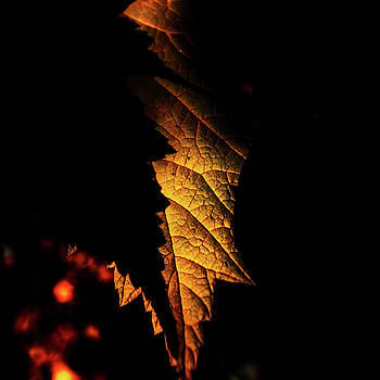 Eclipse of the Leaf by Tim Beebe