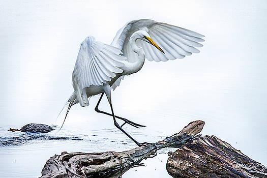 Egret Ballet by David Wagenblatt