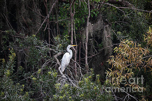 Egret Perch - Lowcountry Marsh  by Dale Powell