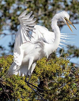 Egret Presentation by James Ekstrom