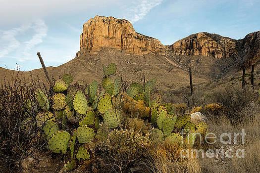 El Capitan with Cactus by Joe Sparks