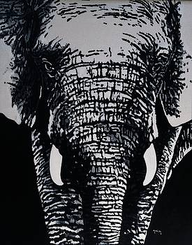Elephant portrait by Anwar Sadat