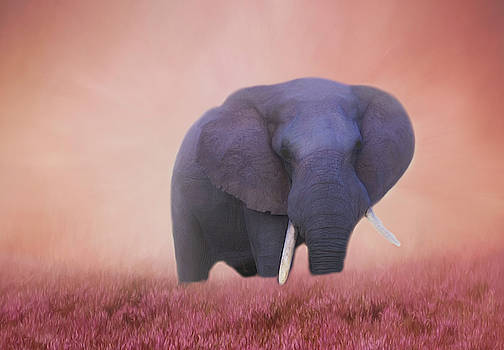 Elephant Surrounded by Pink by Kay Kochenderfer