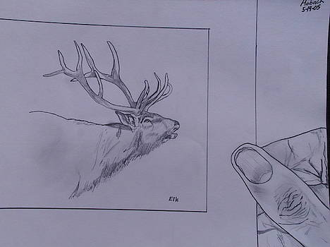 Elk Drawing Matted by Michael Hoback