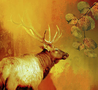 Elk In Autumn by Linda Cox