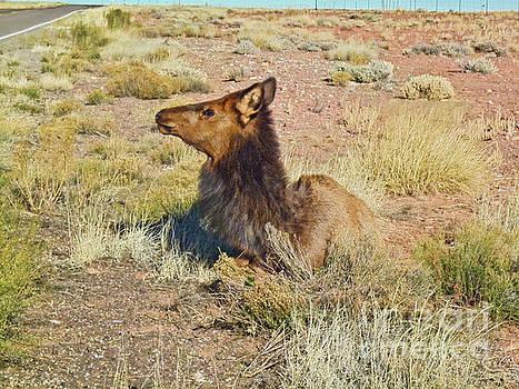 Elk MSC_007 by Howard Stapleton