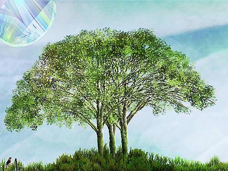 Elm Tree by Marie Jamieson