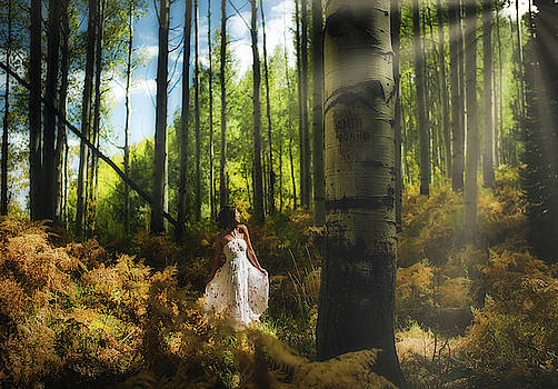 Enchanted Forest by Stacy Burk