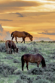 End of Day Grazing by Barbara Hayton