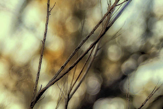 Natural Abstract Photography - Endeavor to Reap