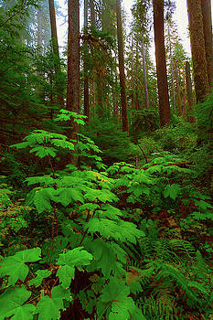 Endor by Brian Knott Photography