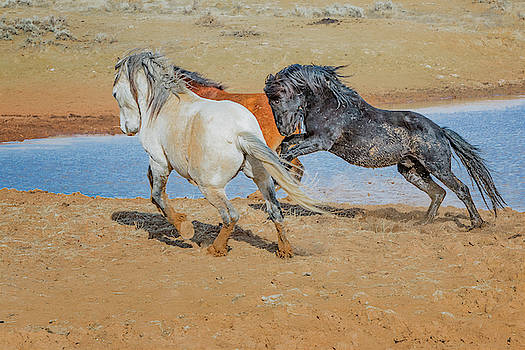 Energy at the Water Hole by Barbara Hayton