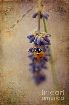 English Lavender by John Edwards