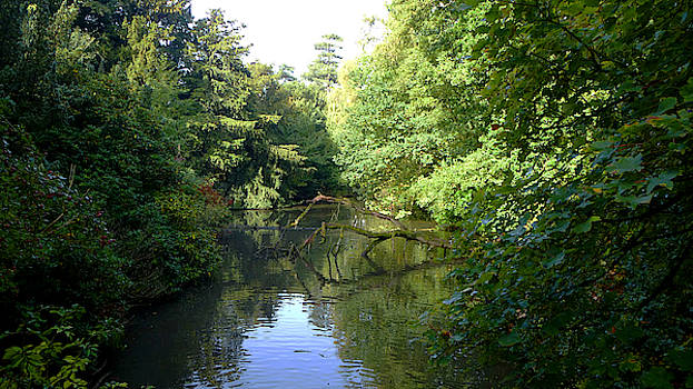 English Woodland River in Early Autumn by Chris Gill