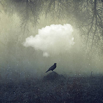 Enigma - Proud Raven by Dirk Wuestenhagen