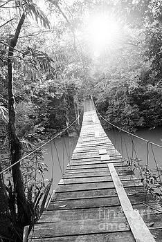 Tim Hester - Epic Bridge Over Jungle River Black and White