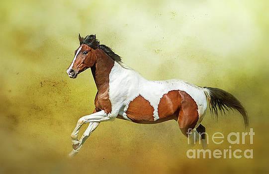 Equine... by Nina Stavlund