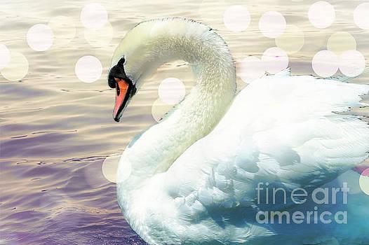 Diann Fisher - Ethereal Swan Of Lake Morton