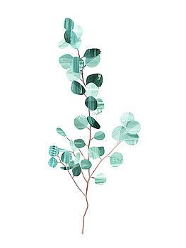 Eucalyptus by Goed Blauw