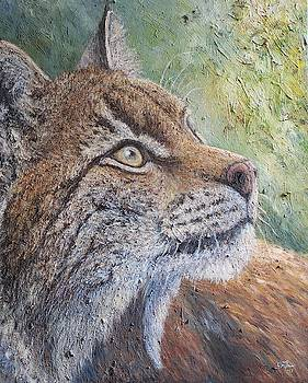 Eurasian Lynx by Elin Johnsen